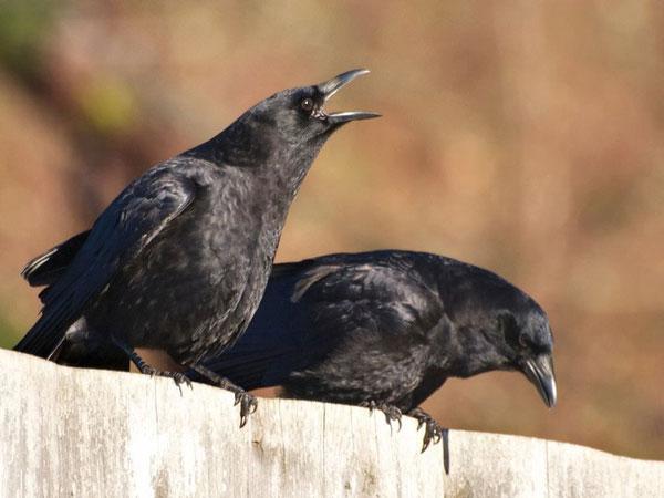 Hóa giải điềm không may khi chim bay vào nhà