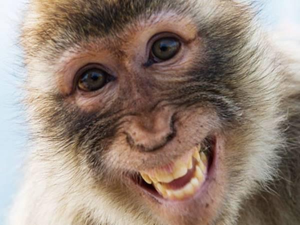 Nằm mơ thấy con khỉ đánh số mấy chắc căn nhất
